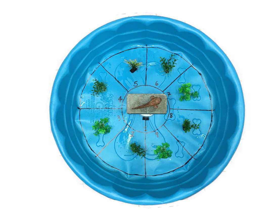 A blue kiddie pool that has been divided into 8 slices with black permanent marker. There is a plant in each section and the release area is in the center.